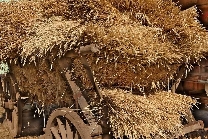 Rolnictwo drobne w końcu 19-go wieku